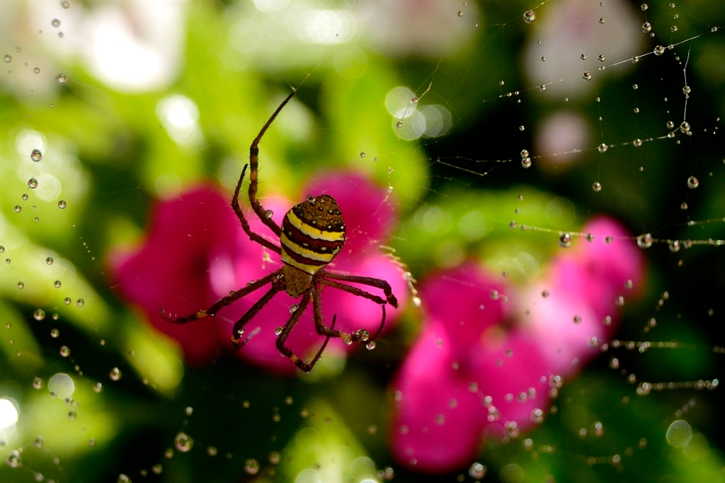Spider photograph