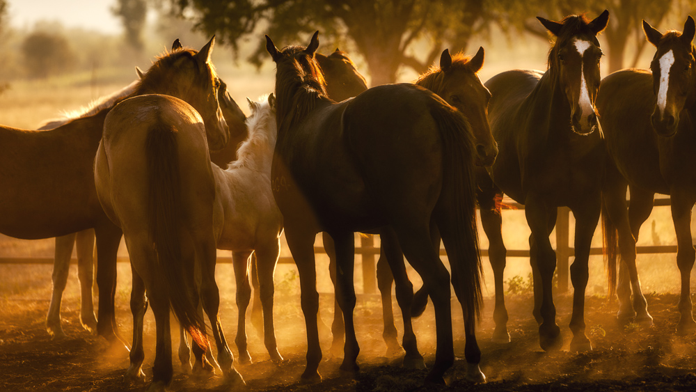 Horses in dust by Bewlley